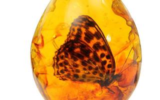 Камень Янтарь: золотой избранник Солнца